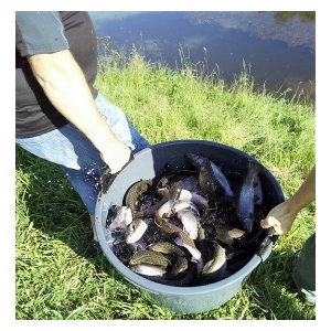 Sedlčanští rybáři vysadili siveny